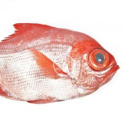 rey pescado